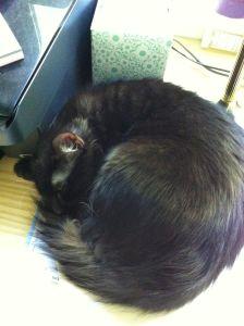 Morpheus asleep on my desk