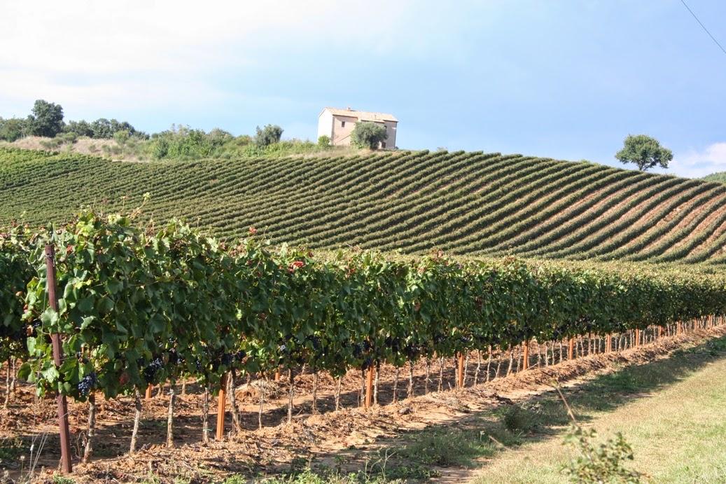 Il paesaggio agrario toscano e le sue economie  Lorenzo