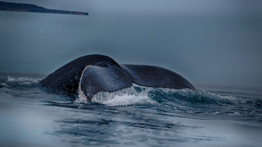 You never know what you might see in the waters off Loreto.