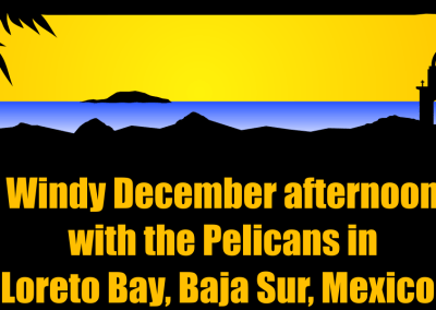 Windy December afternoon with the Pelicans in Loreto Bay, Baja Sur, Mexico!