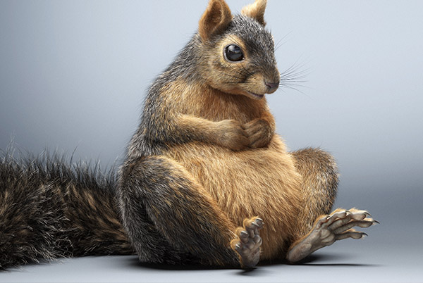 CG Squirrel