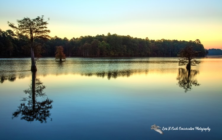 Early morning view of the water's shoreline with cypress trees in water at Harwoods Mill Reservoir in York County, Virginia.