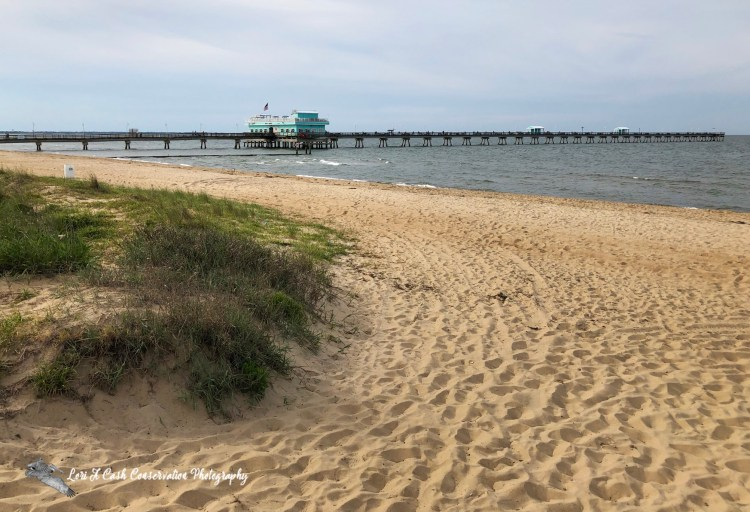 Ocean View Fishing Pier located on the Chesapeake Bay in Norfolk, Virginia is the largest pier in North America.