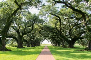Ketamine turbo boosts brain compost to improve your mood like this oak grove.