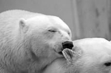 Teddy Bear Lazy Polar Bear Animal Rest Sleep