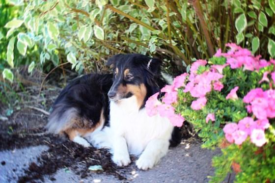Dogs, Garden