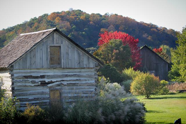 Hydrangeas, White Barn