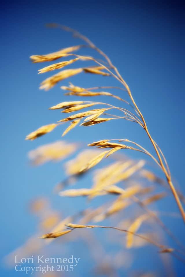 Grain, LKennedy