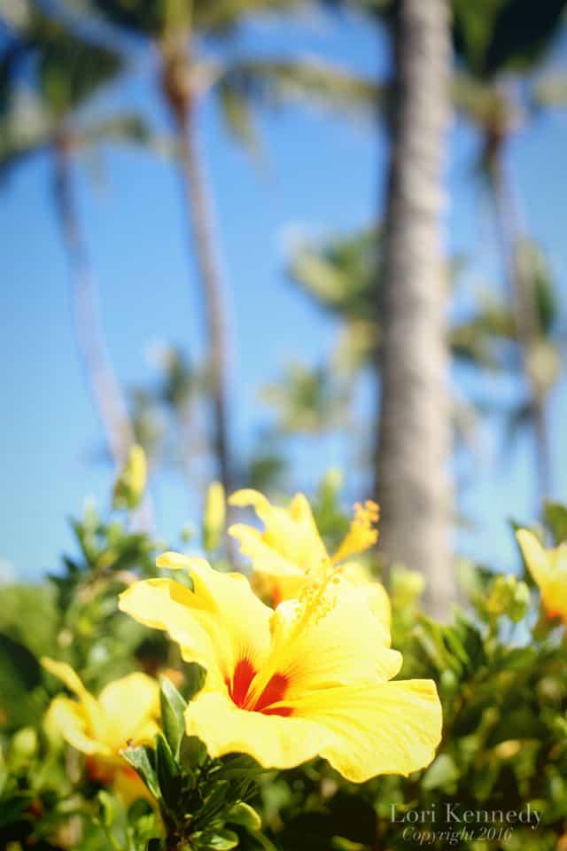 Hawaii.Flowers.LoriKennedy002