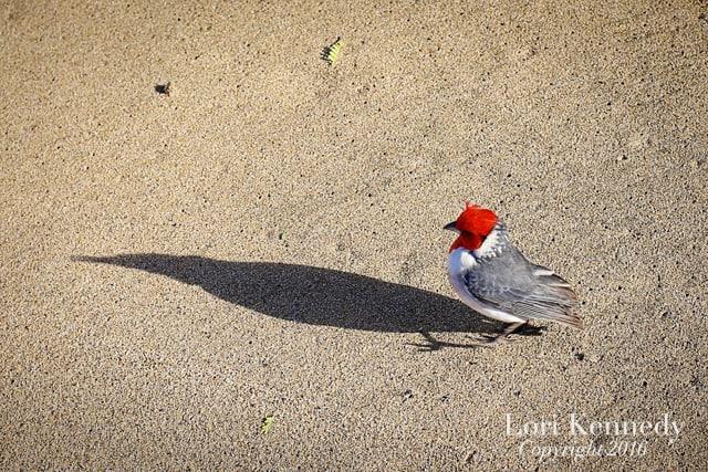 Bird, Shadow, Hawaii