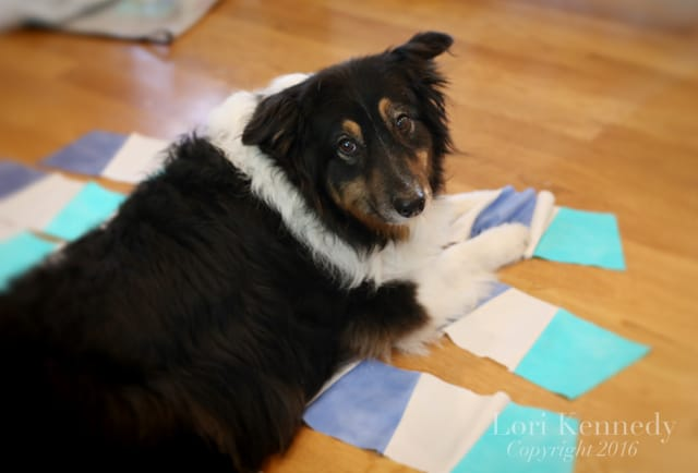 Dogs.Quilts.LoriKennedy002