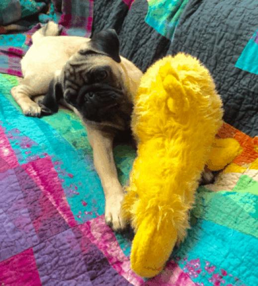 Laura's Pug, Ernest