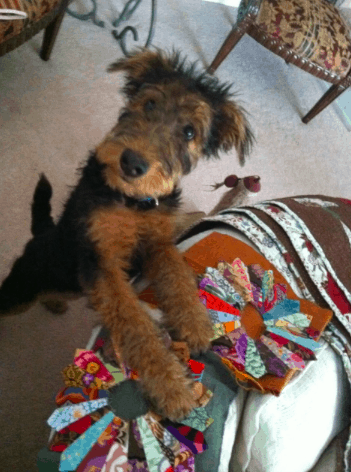Joanne Moore's Cindy Bear--loves her Dresden Plate quilt--is it finished Joanne?