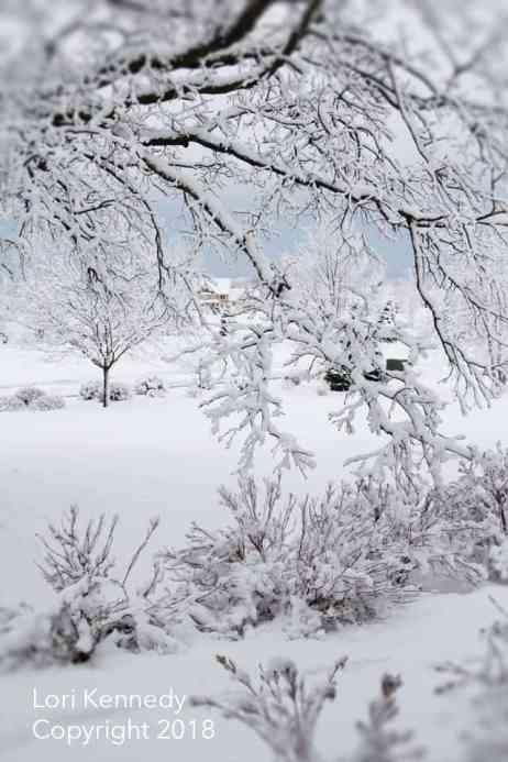 Lori Kennedy, Snow, Photography