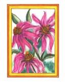 Echinacea - JGA01 $4