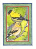 Gold Finches - JHMD14 $4