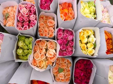 Muchas rosas