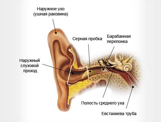 Серные пробки в ушах у ребенка: симптомы, что делать