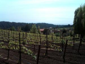View of Monterey Bay from Soquel Vineyards