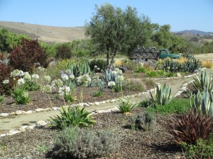 The garden at Dierberg Estate Vineyard.