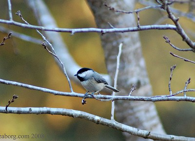 Shots: Join Me!  The Great Backyard Bird Count
