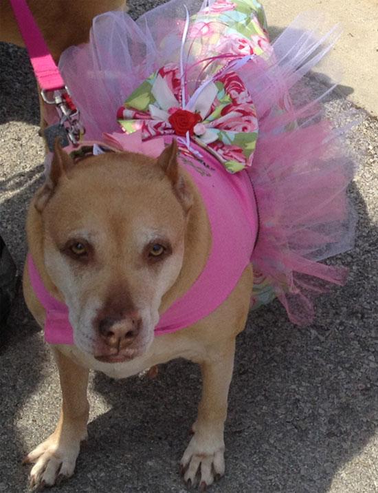 dog-dress
