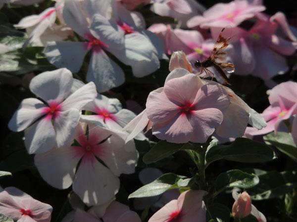 original-flower