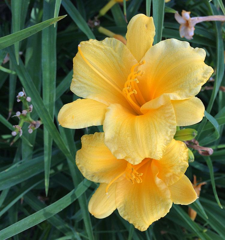 yellow-flowr