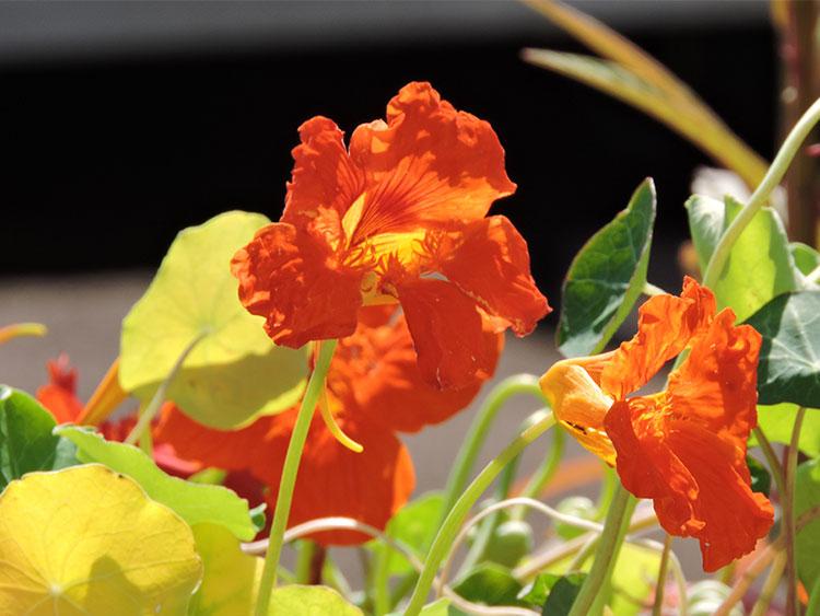 sun-on-the-flowers