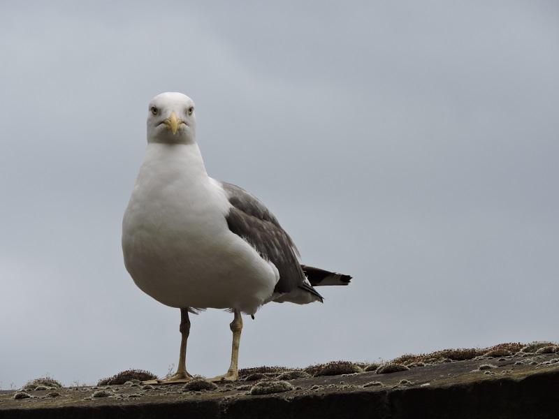 bird with attitude