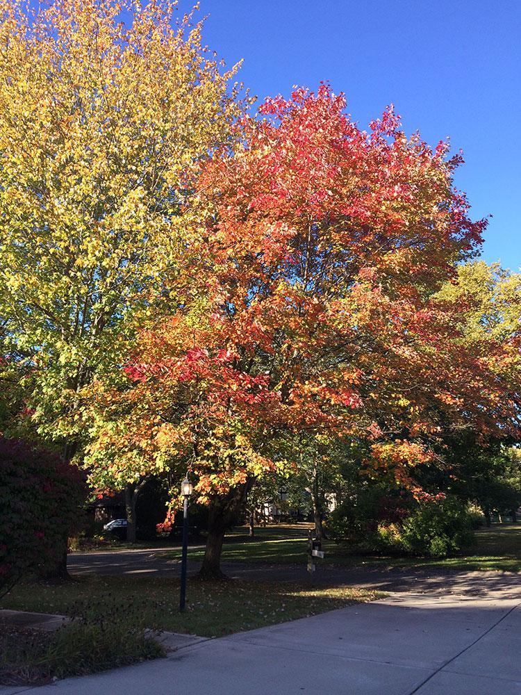 Fall-color - Copy