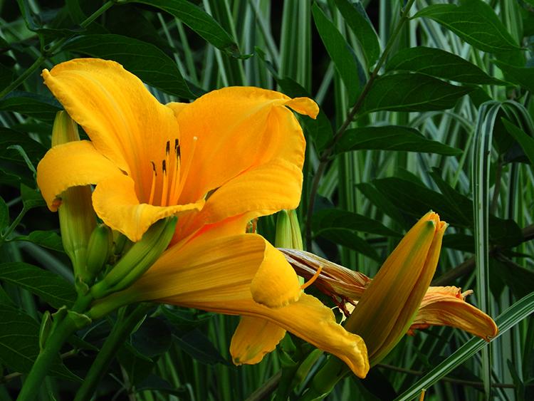 zionsville flower