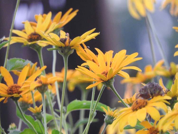 Aug flowers 008