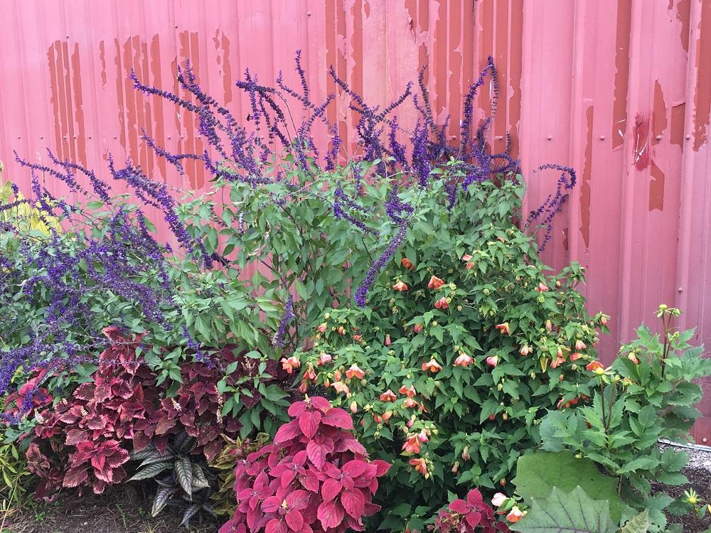 flowers-against-fence-in-braod-ripple