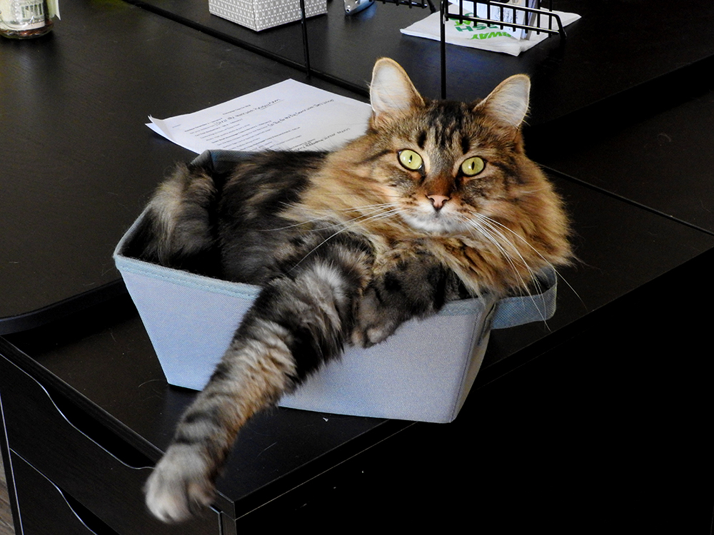 benny-in-a-box-004