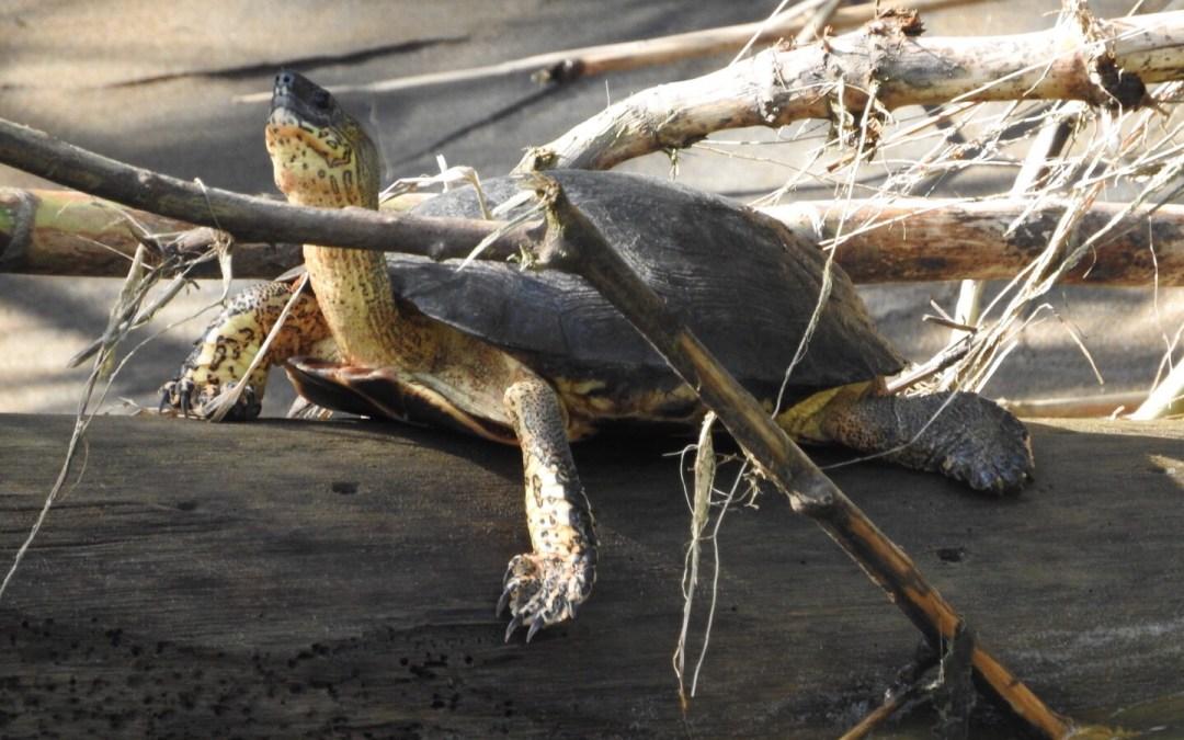 Turtle in the Sun