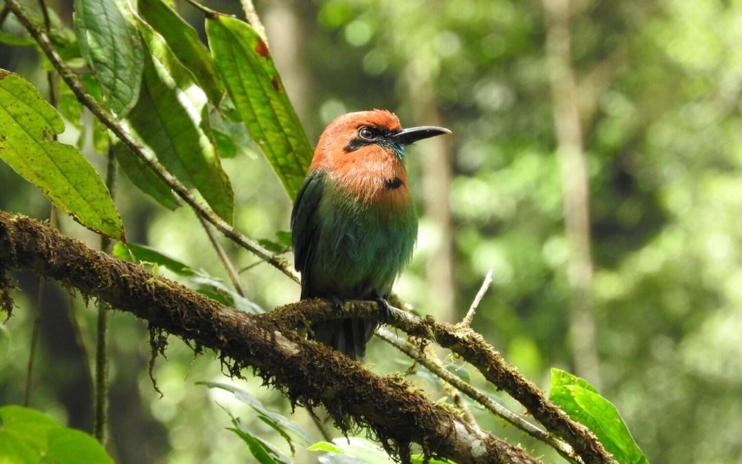 Bird in the Rainforest