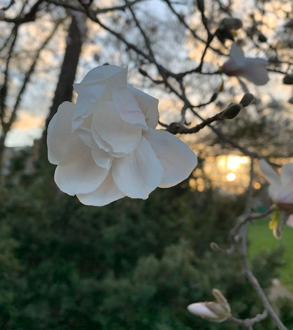 Flower at the Golden Hour