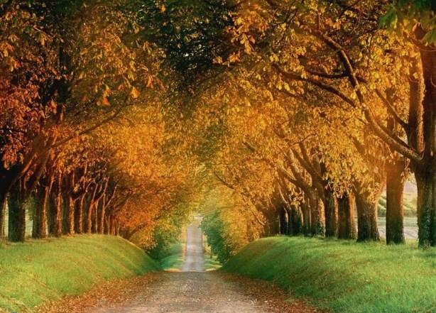 Propositions pour l'automne 2013