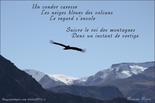 le roi condor