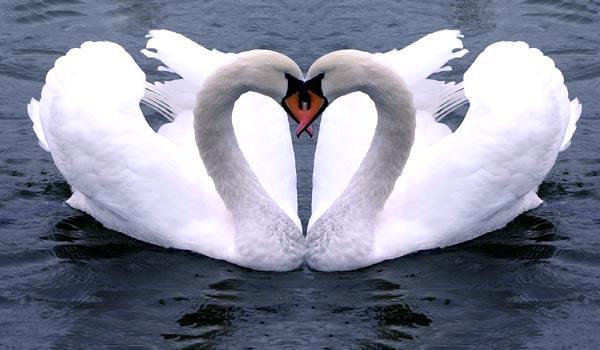 saviez-animaux-fideles-amour-L-Alpinw