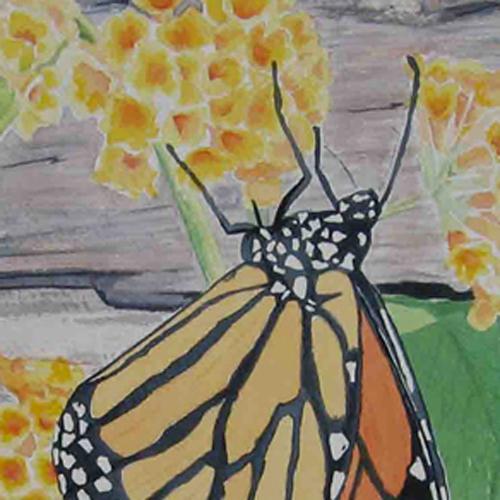 monarch watercolour
