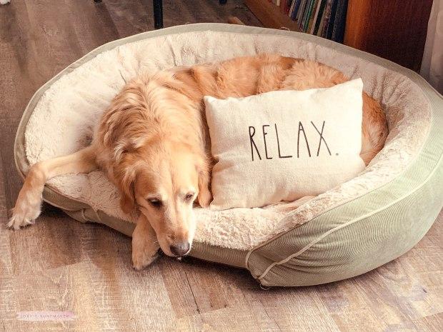 Rae Dunn Pillow-1