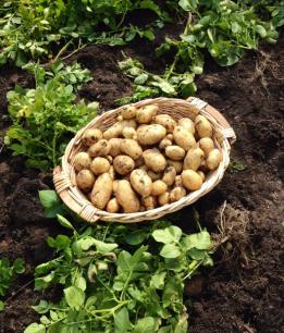 5kg di patate