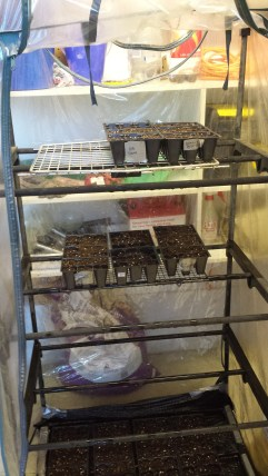 We lost the shelves for this li'l greenhouse so I'm using the door of a dog crate and a cooling rack.