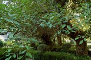 Erythrina