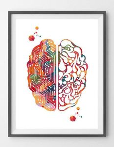 Raffigurazione di un cervello.