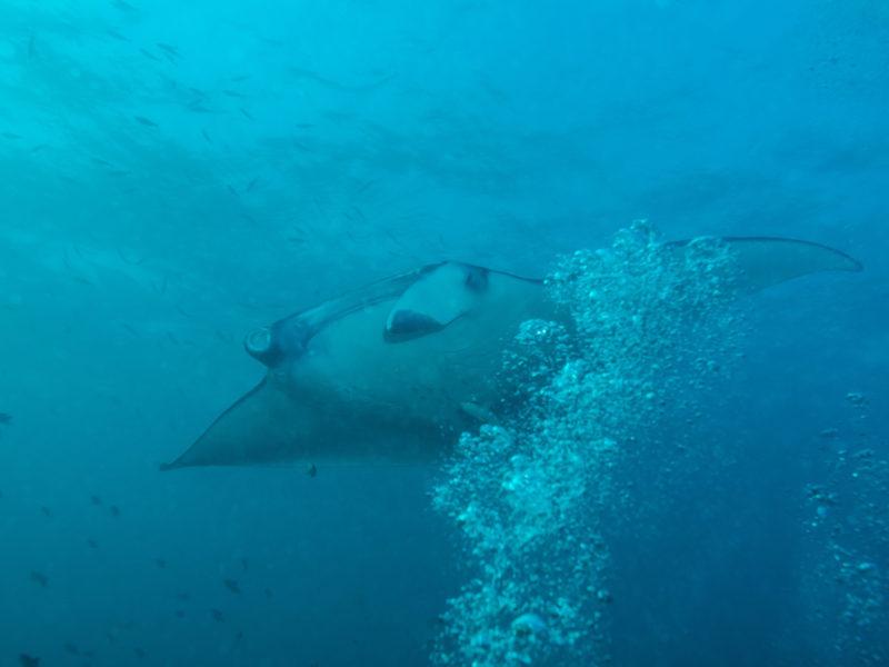 Tio Sports Discover Scuba Diving