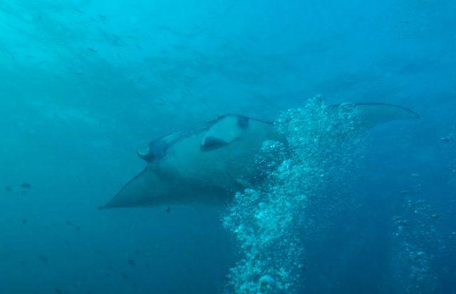 Tio Sports 2 Tank Diving