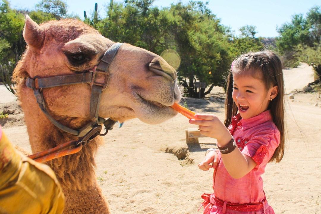 Wild Canyon Camel Ride